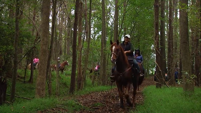 Horseback trail rides on Vashon Island Washington.