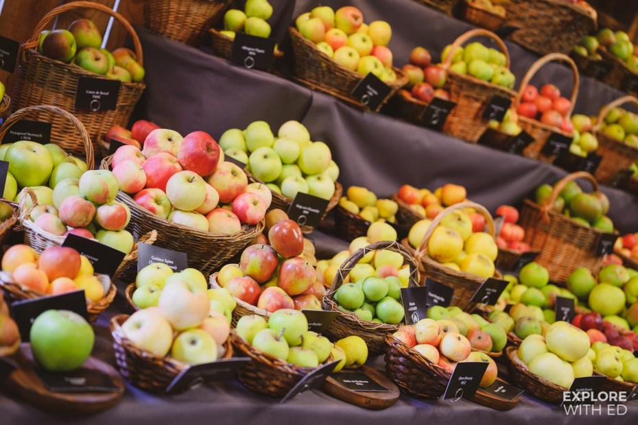 Apple harvest at Erddig Hall, Wrexham