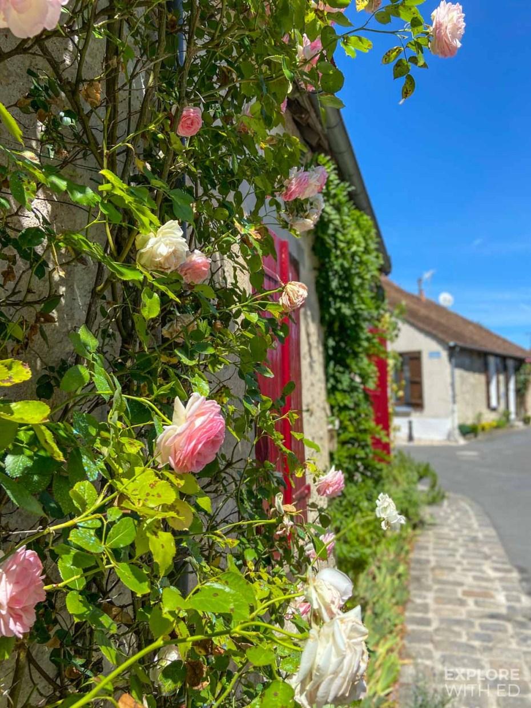 Roses of Provins, France