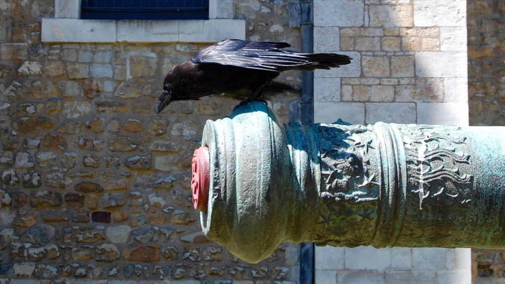 Raven, Tower of London