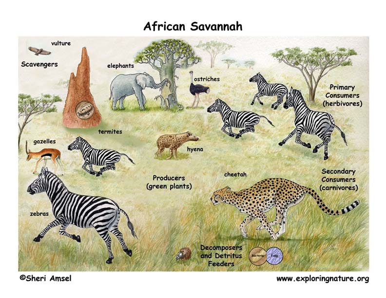 African Veldt And Savannah