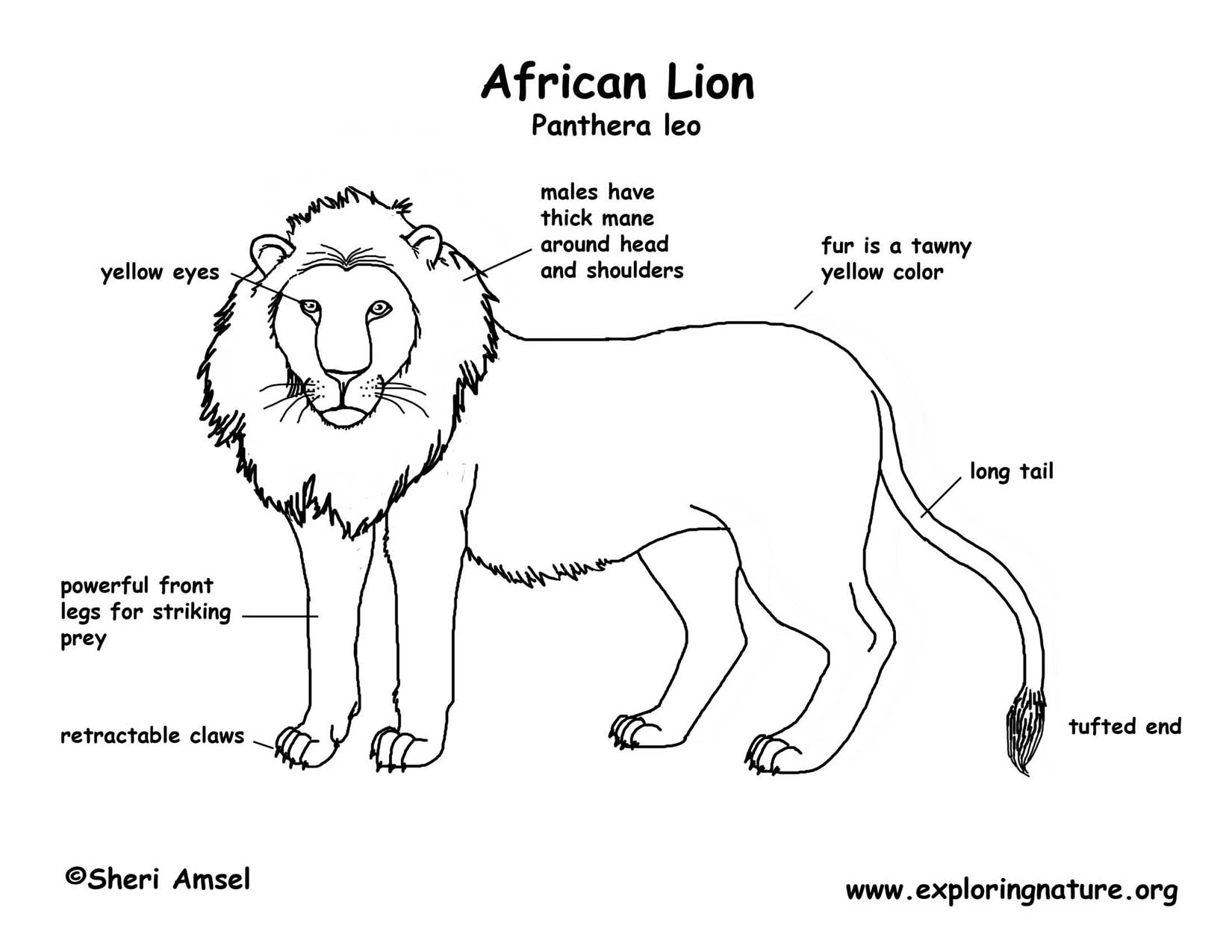 Diagrams About Lions