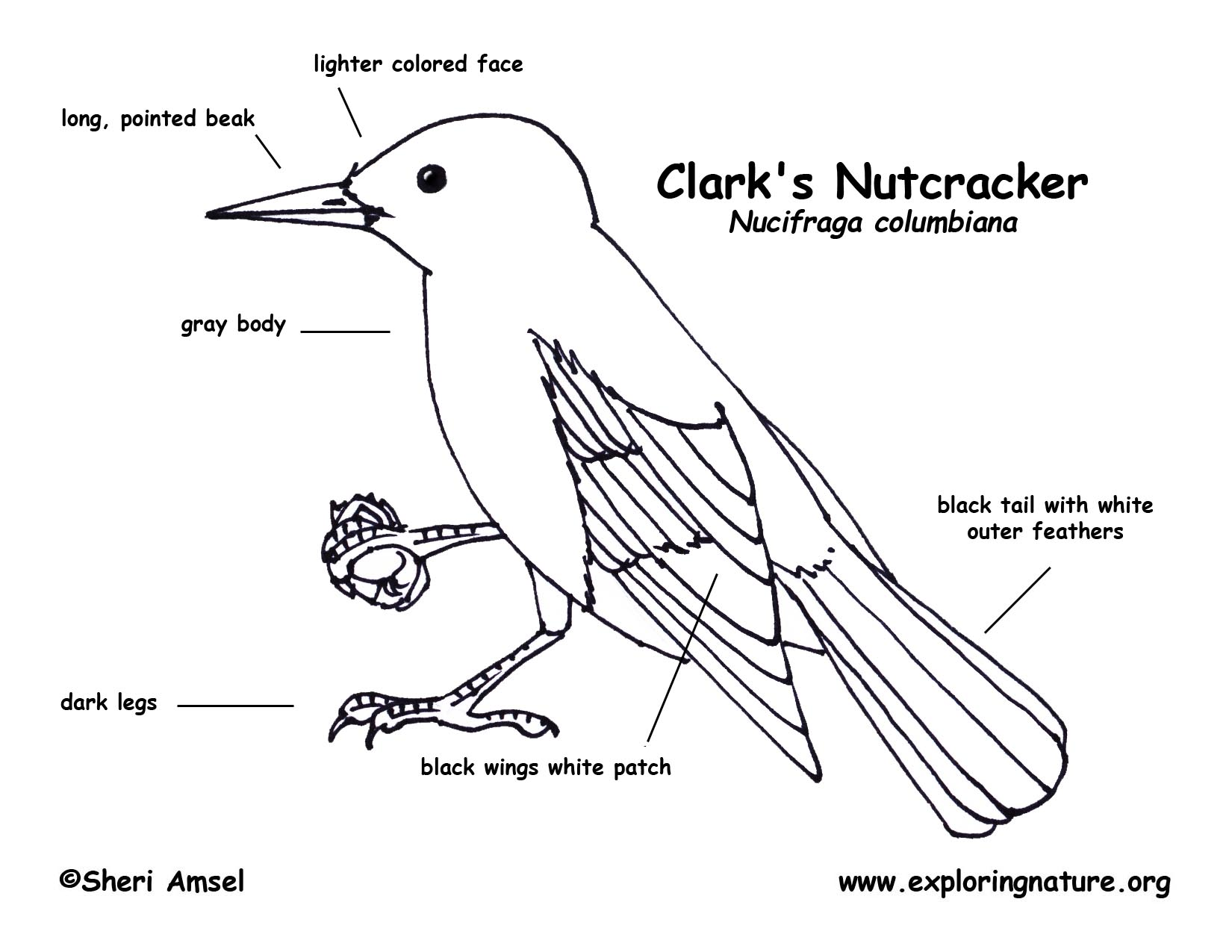 Label Bird Body Parts Sketch Coloring Page