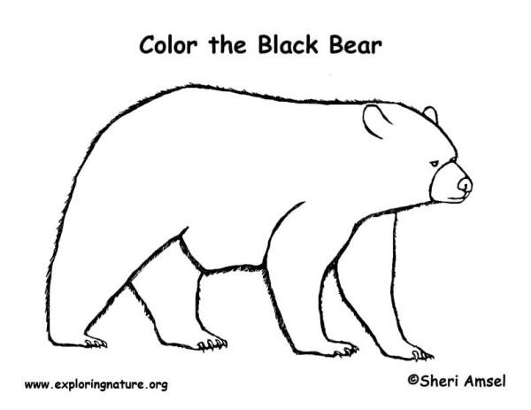 black bear coloring page # 5