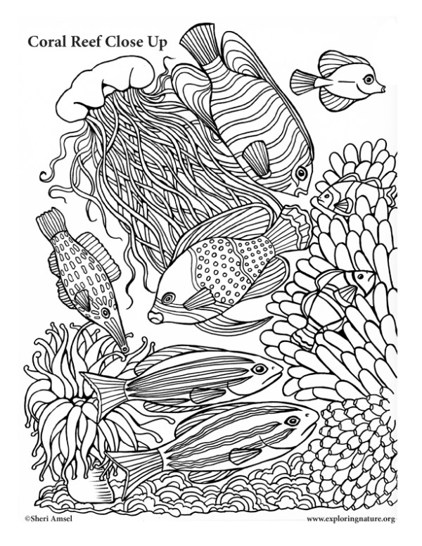 coral coloring pages # 19