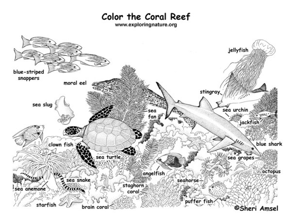 coral coloring pages # 25