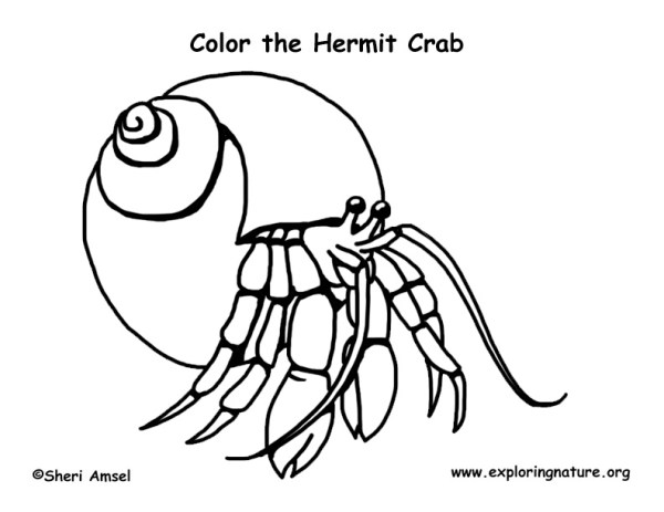 hermit crab coloring page # 13
