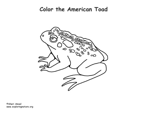toad coloring pages # 10