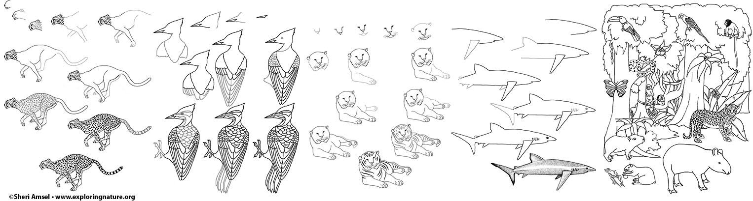 Drawing Animals And Habitats