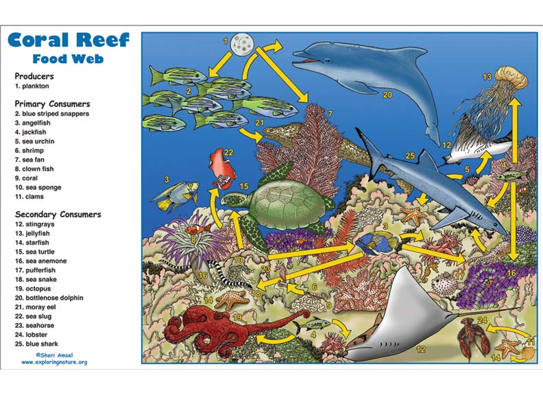 Plant Reefs Life Coral