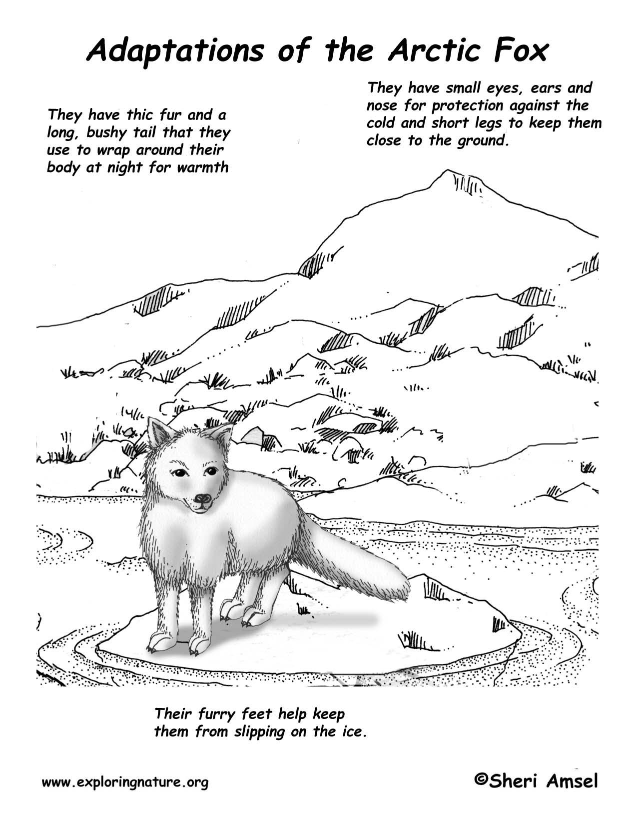 Arctic Fox 25p Wiring Diagram