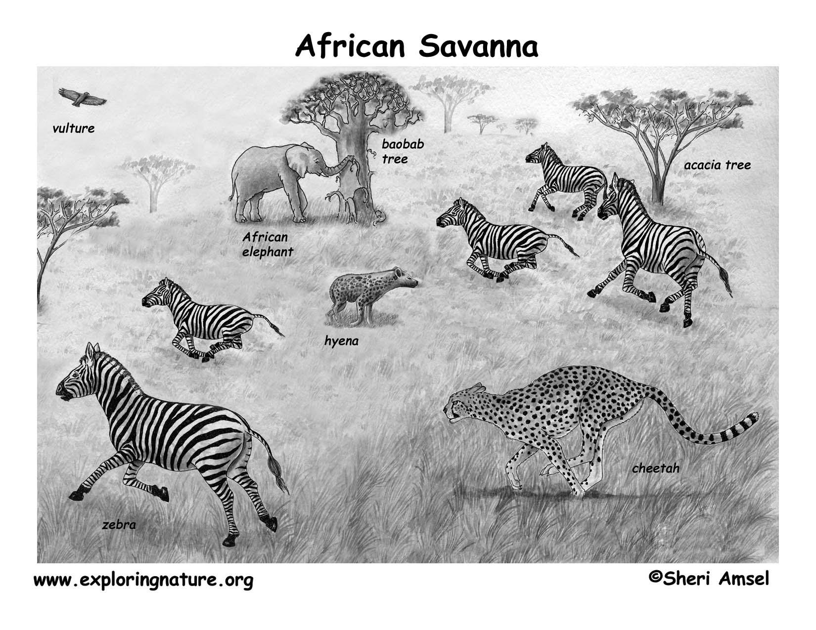 African Veldt And Savanna