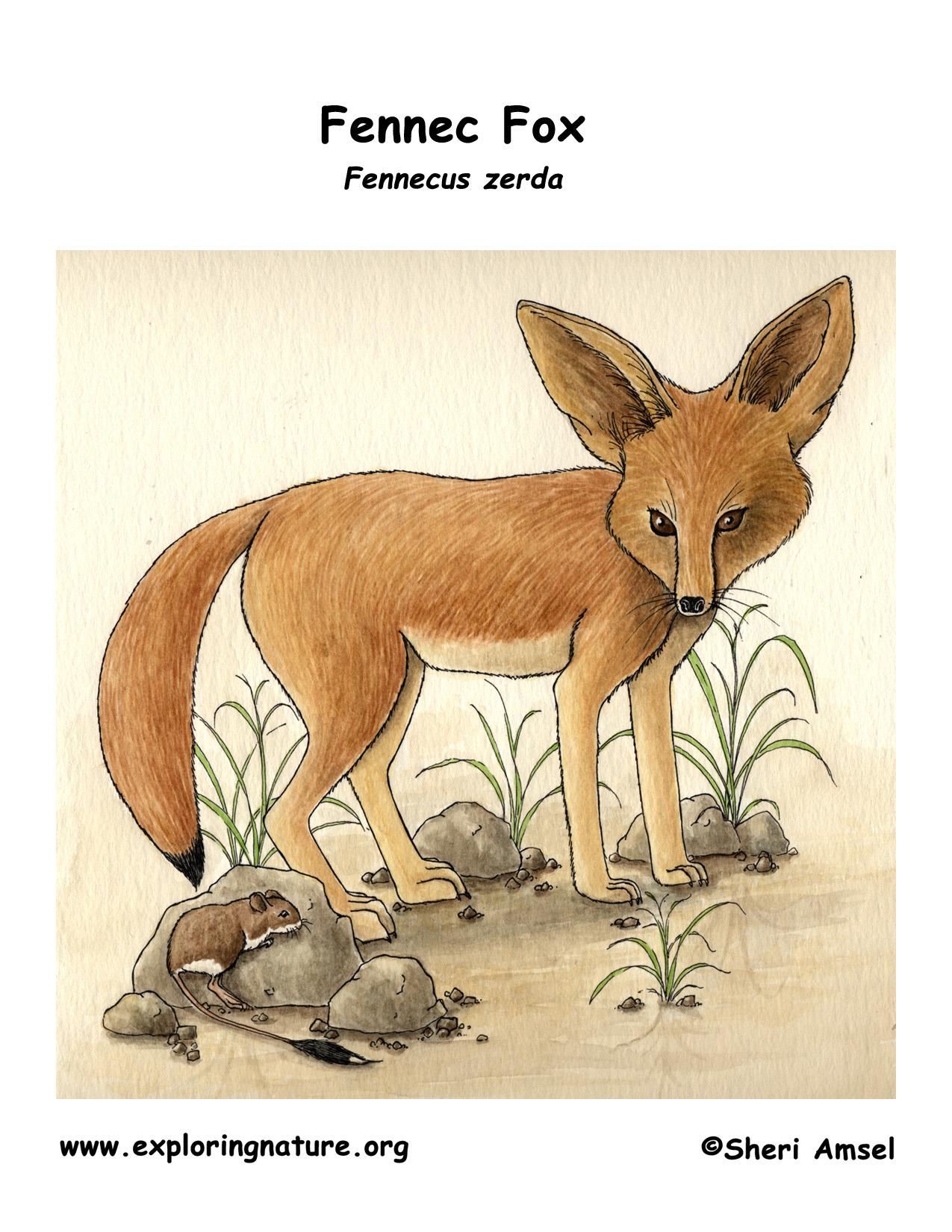 Fox Fennec