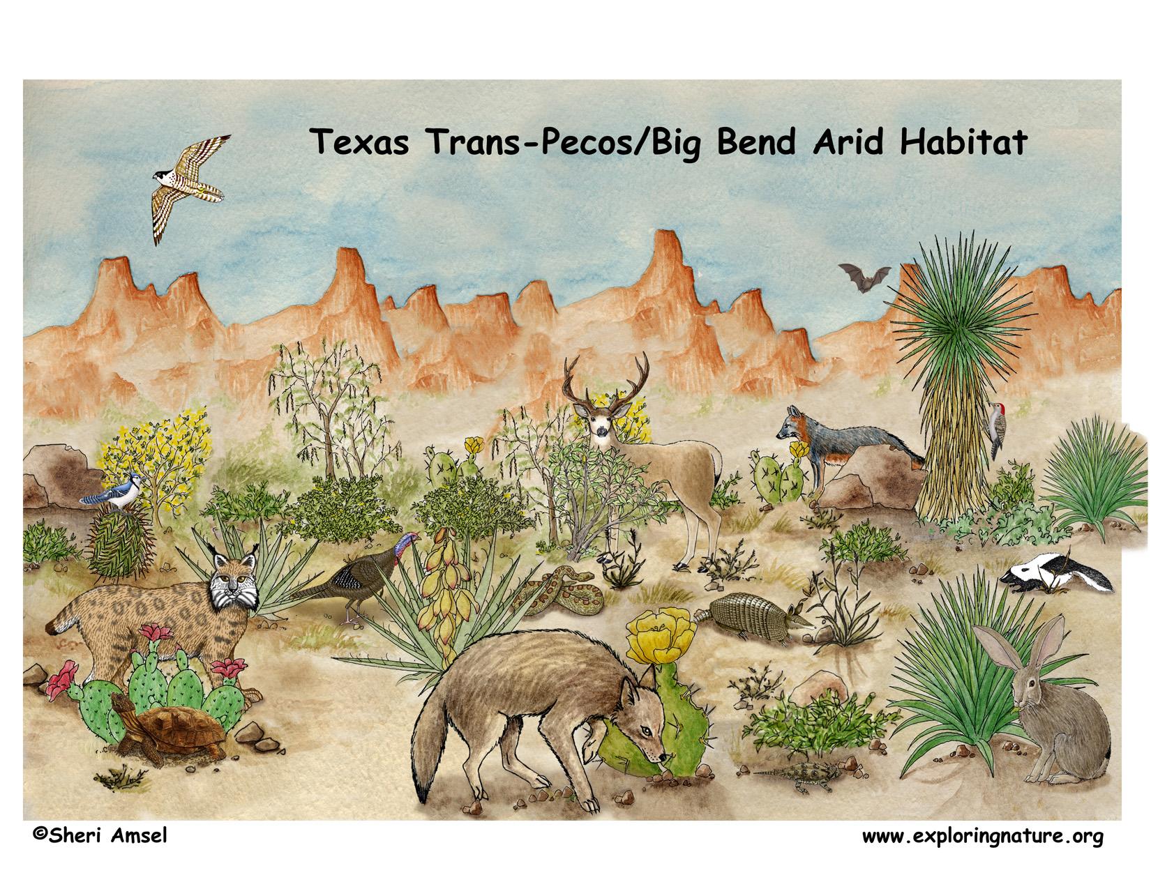 Texas Trans Pecos Big Bend Arid Habitat