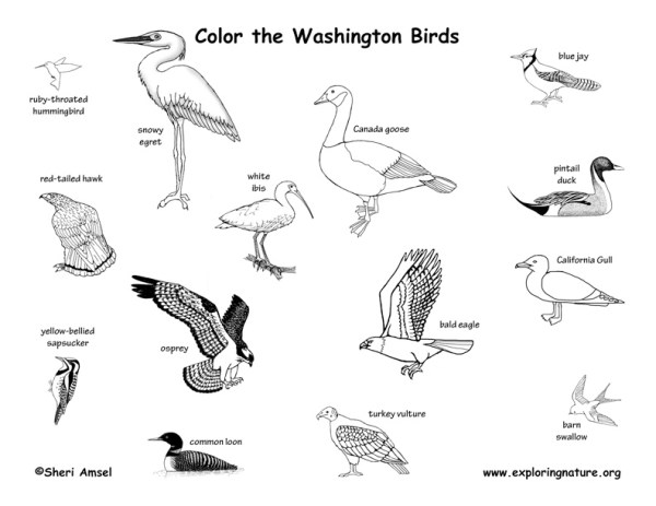 Washington Habitats, Mammals, Birds, Amphibians, Reptiles