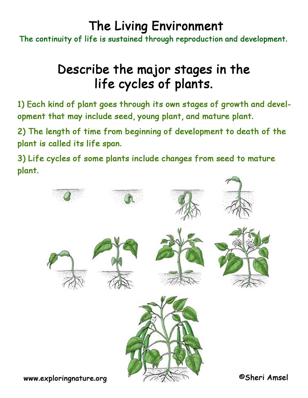 Plant Pollination Worksheet