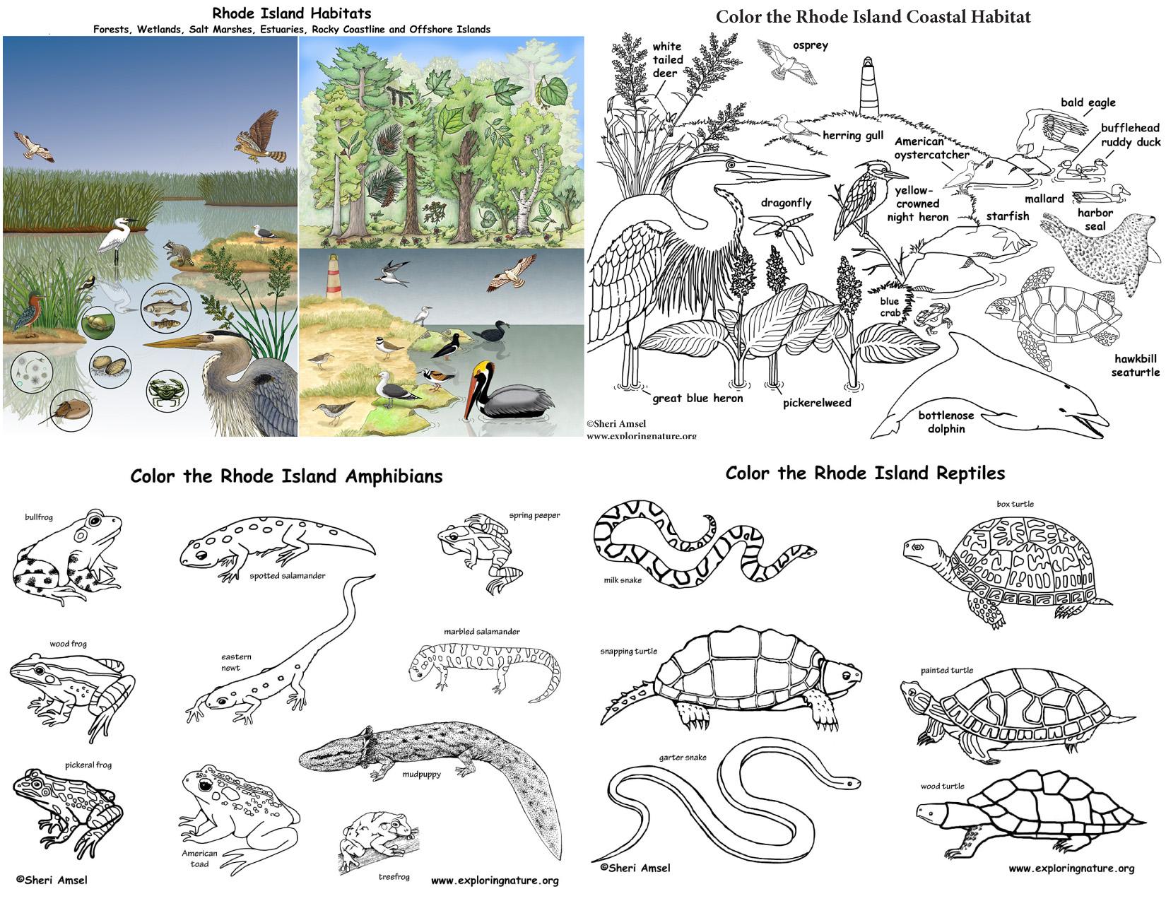 Rhode Island S Animals And Habitats Bundle