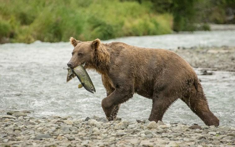Alaska 18 (639 of 893)