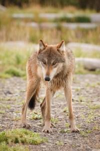 Sheila Newenham Wildlife Photography