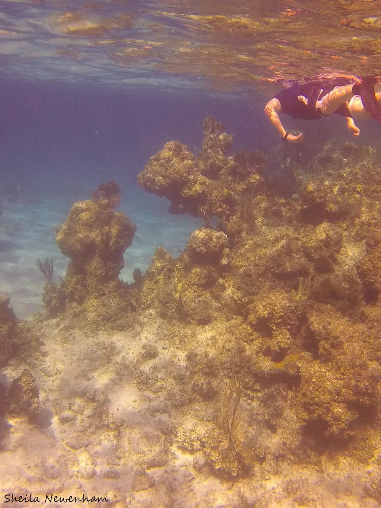 snorkelng Eleuthera Bahamas