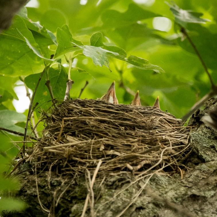Robn's nest