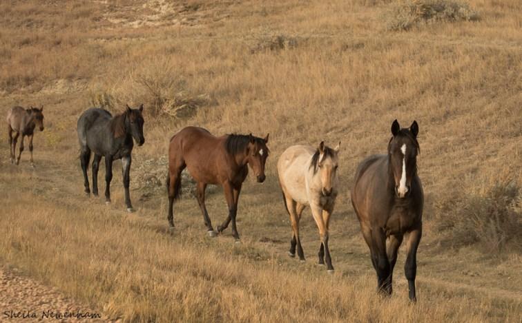 North Dakota Horses