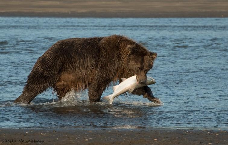 Brown Bear Stories