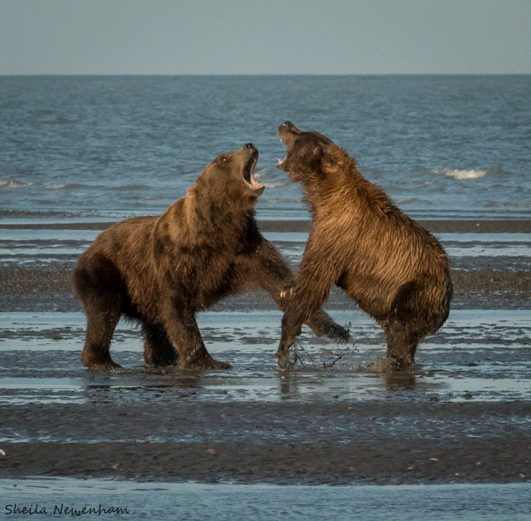 Bear Stories