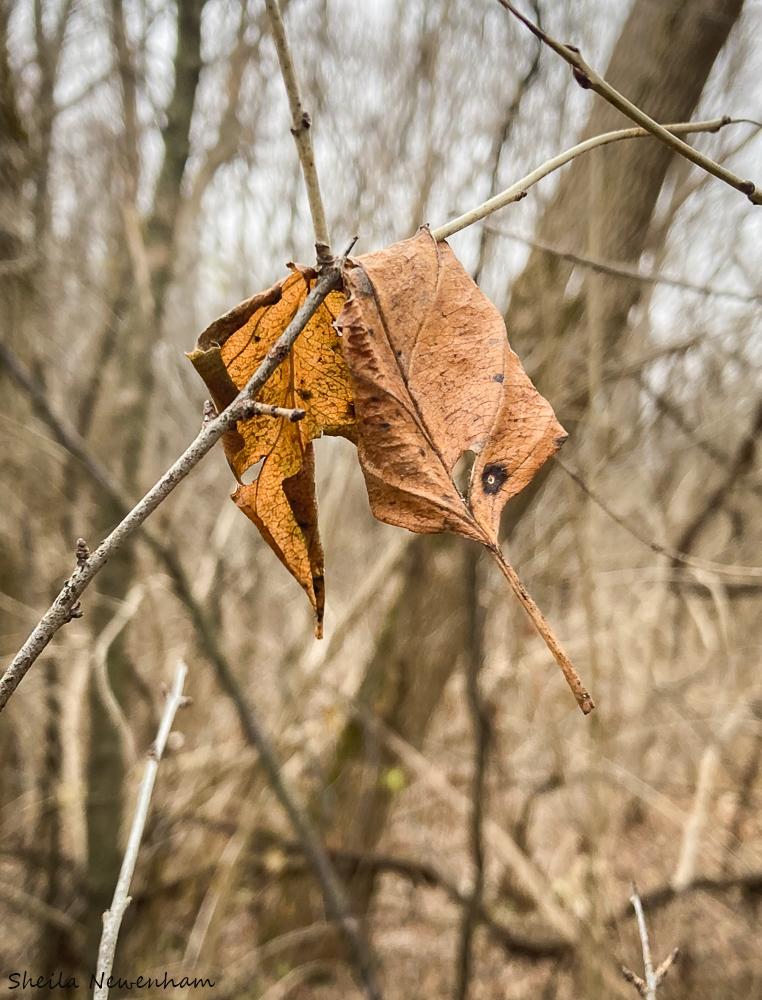Nature heals
