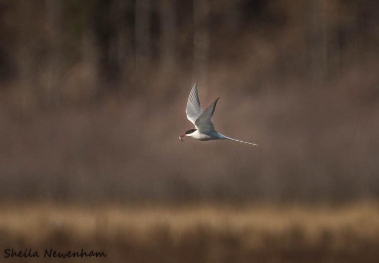 Bird migration in Anchorage