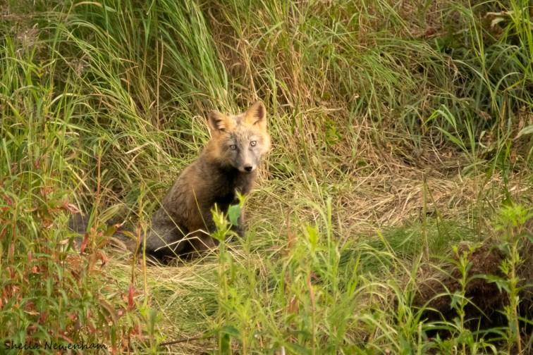 CRoss fox kit