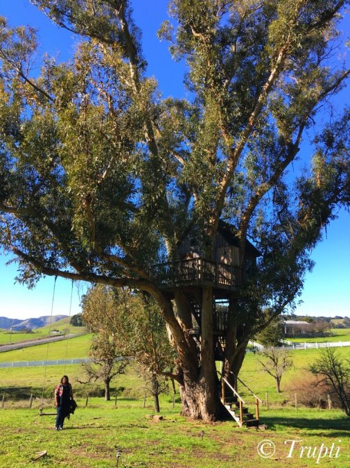 Swallowtail Magic Grove Treehouse Petaluma Airbnb