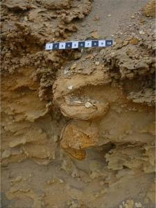 Como se forman los fosiles EXPLOROCK PERU Imagen 2