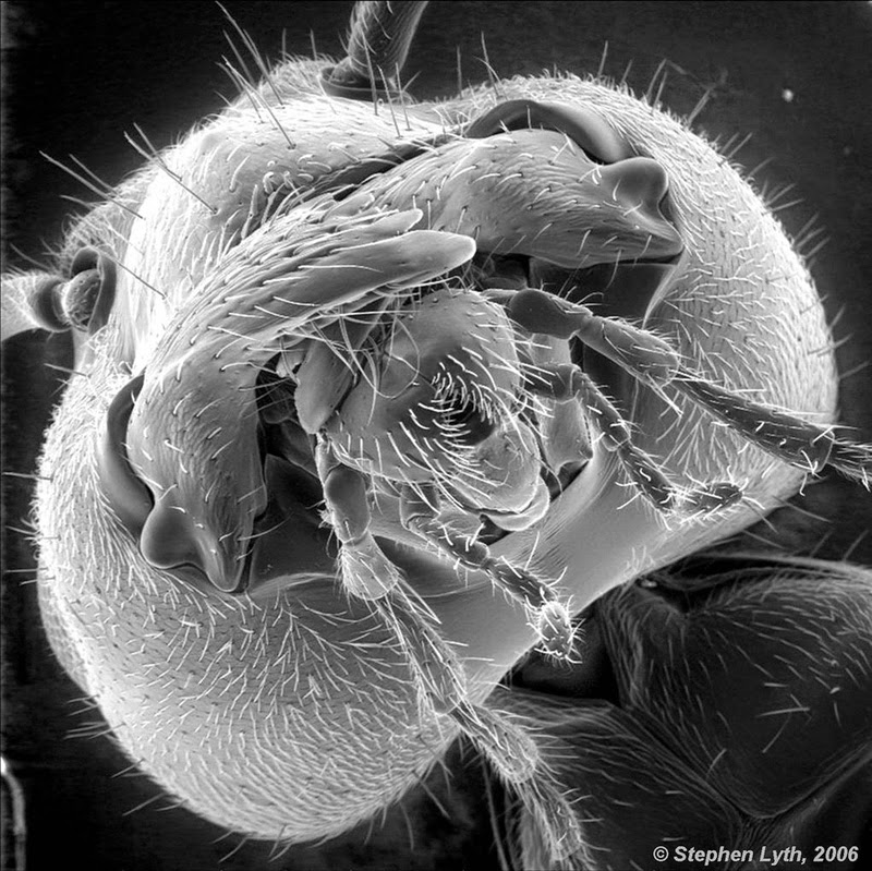 The face of an ant