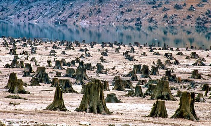 treestumps