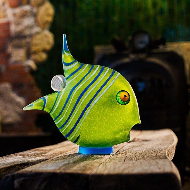 Angel Fish Large Exposures International Gallery Of