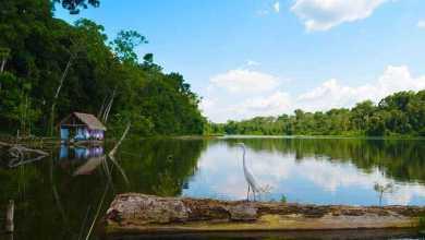 En esta ocasión los invitamos a visitar y que encuentren la magia y belleza que tiene el corredor de Selva. Foto: Garza Amazónica. Mary Janeth Giraldo Guerra. Lago Marasha, Amazonas.