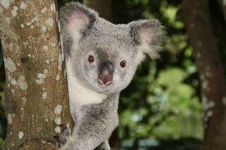 TARIFA ERROR VUELOS BUSINESS australia