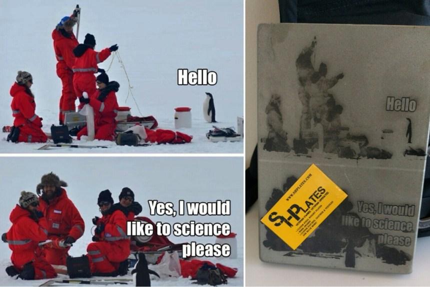Science penguin meme on steel plates. I love it