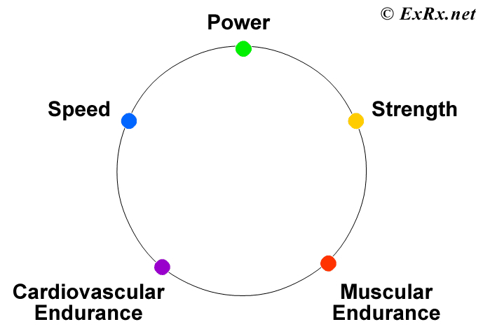 Motor Components Of Physical Fitness