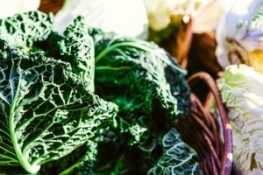 wholesale toolkit cabbage