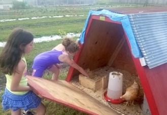 farm to school toolkit pilot chickens