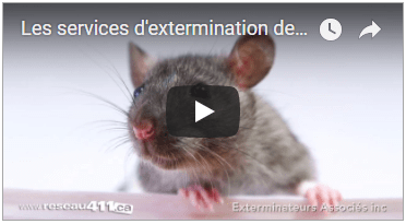 extermination-insectes-rongeurs-montreal-laval-rive-sud