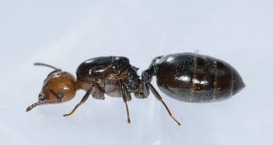 Comment survivre à une invasion de fourmis, Exterminateurs Associés, photo