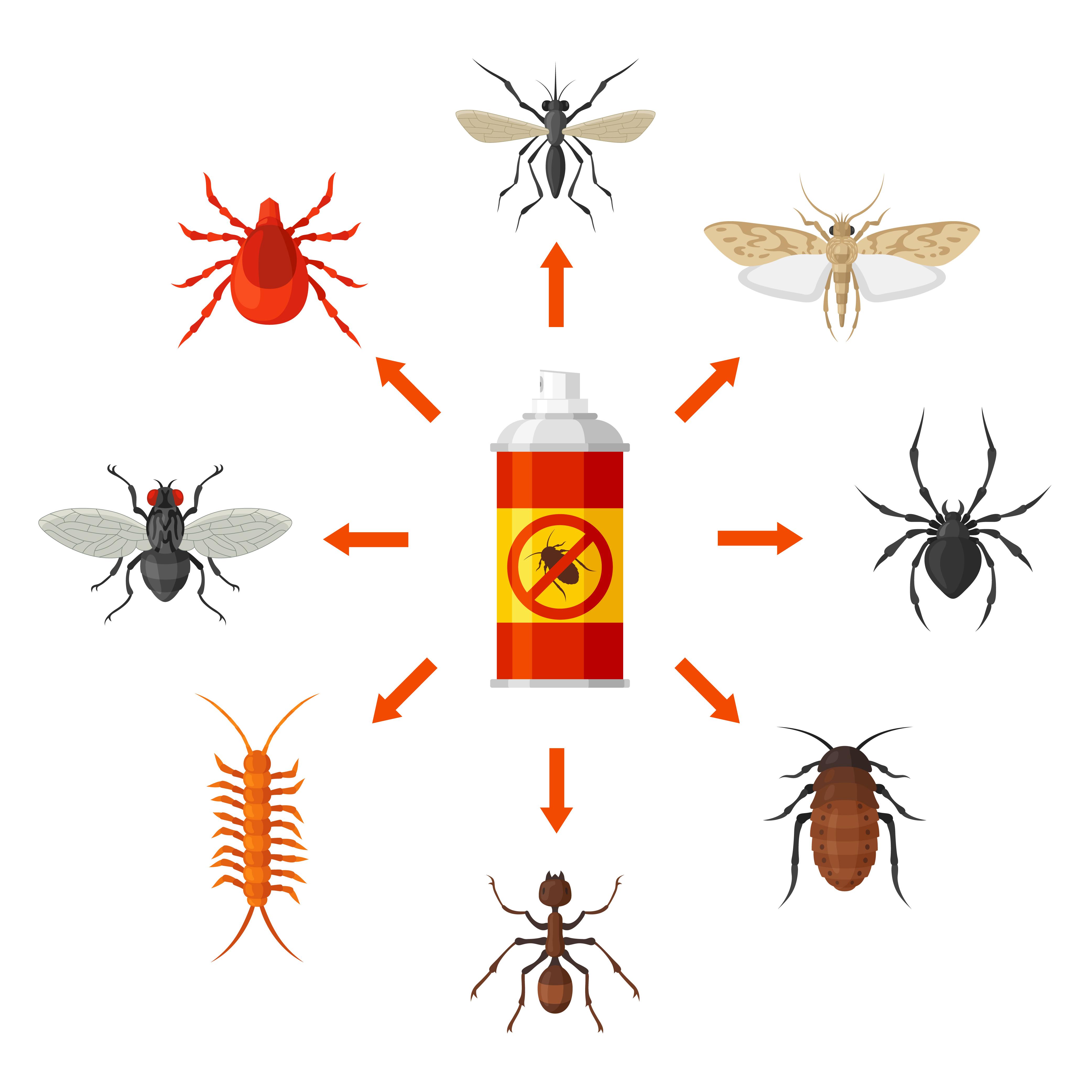 identifier un insecte de maison blogue exterminateurs. Black Bedroom Furniture Sets. Home Design Ideas