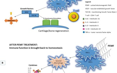 The Use of Pulsed Electromagnetic Field to Modulate Inflammation and Improve Tissue Regeneration: A Review