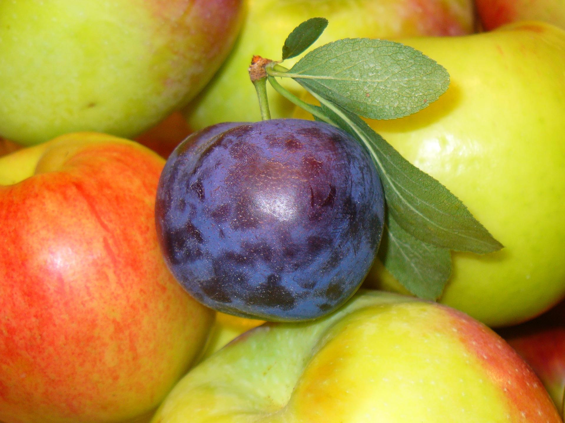 benefits of prunes