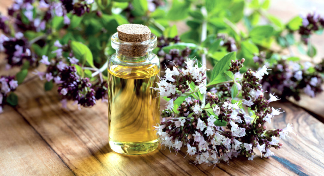 Oregano Oil for Candida