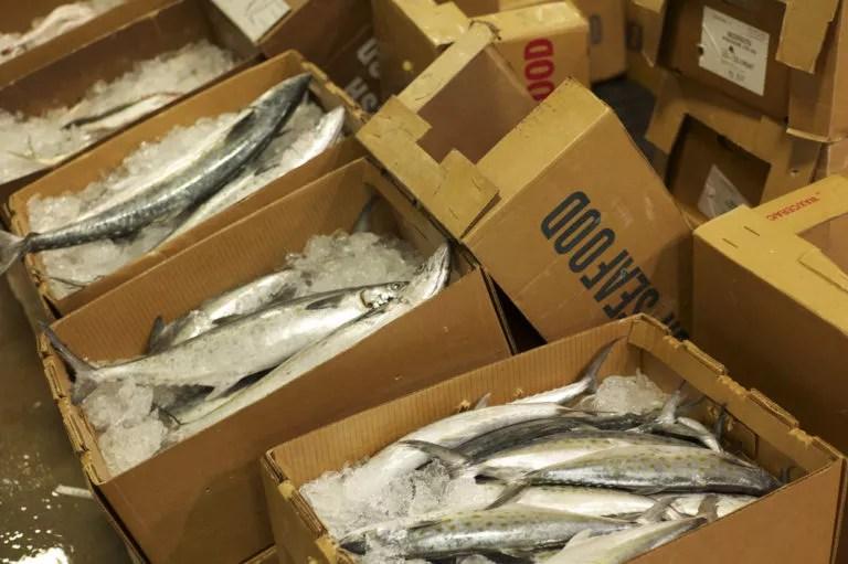 New Fulton Fish Market in Hunt's Point, Bronx, NY