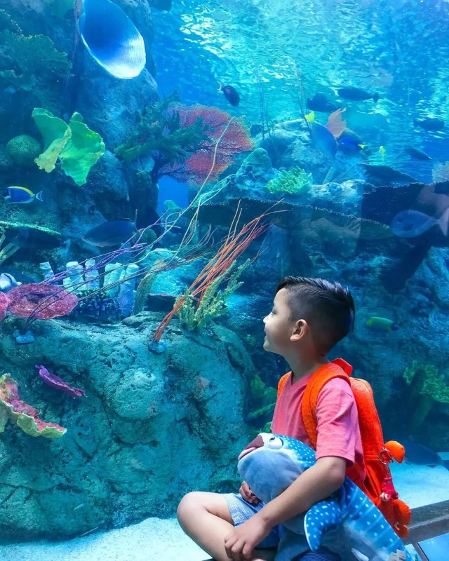 Child Viewing Fish in the Aquarium of the Pacific. Photo by Instagram user @z_from_york